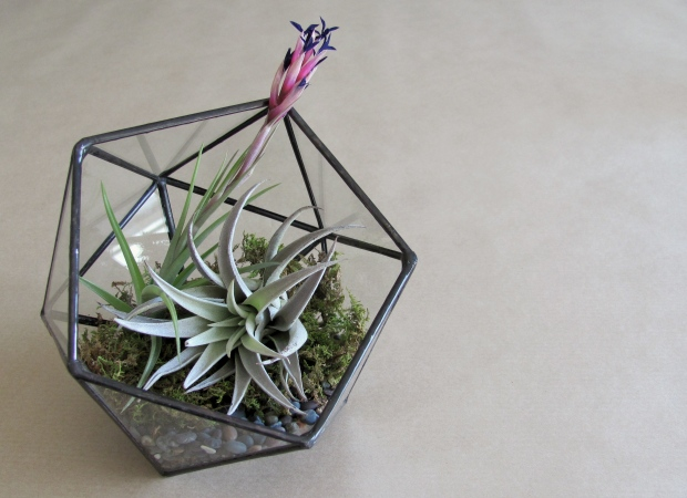 Geometric Terrarium via Dressed In Orange