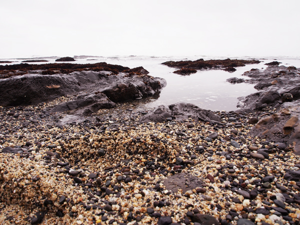 Fitzgerald Marine Reserve tide pools; Half Moon Bay, CA