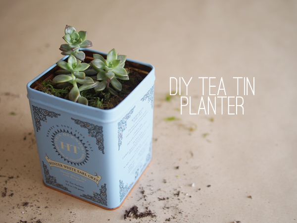DIY Tea Tin Planter | Dressed In Orange
